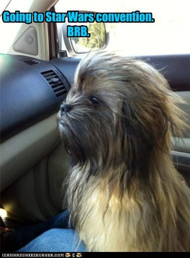 brb,car,chewbacca,convention,ewok,going,resemblance,star wars,whatbreed