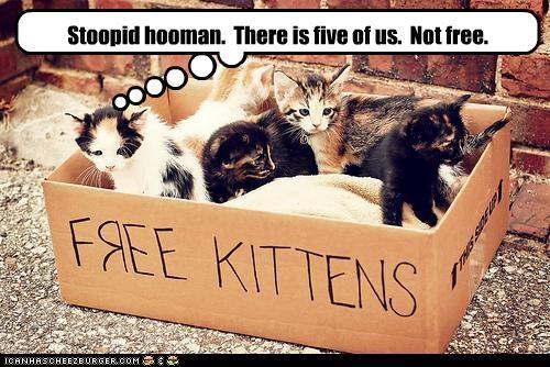 box,caption,captioned,cat,correction,five,free kittens,human,kitten,lolspeak,sign,stupid,three