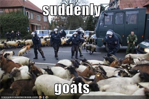 suddenly  goats