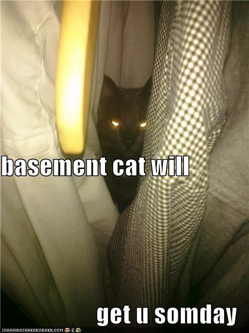basement cat will get u somday