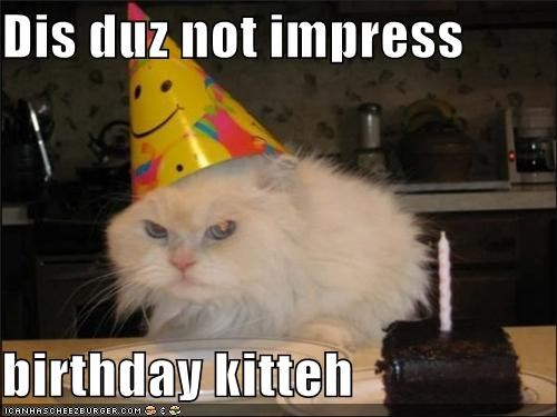 Dis duz not impress  birthday kitteh
