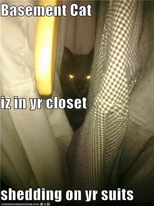 Basement Cat iz in yr closet shedding on yr suits