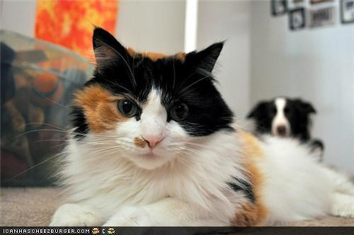Kittehs vs. Goggies: Photobombz Edition