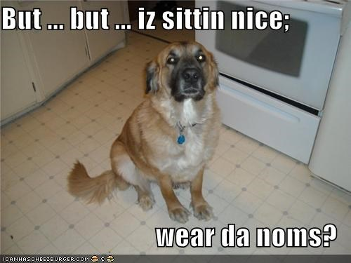 But ... but ... iz sittin nice;  wear da noms?