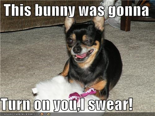 bunny,chihuahua,evil,excuse,honest,i swear,justification,protection,turn