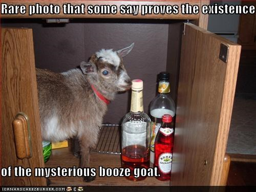 Rare photo that some say proves the existence  of the mysterious booze goat.