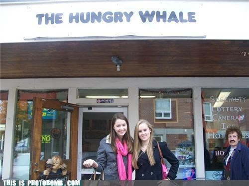 The Hungry Whale