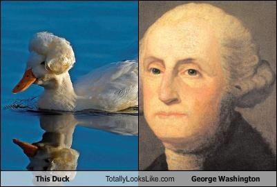 This Duck Totally Looks Like George Washington