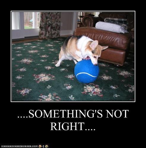 ball,corgi,FAIL,fetching,giant,incorrect,not,right,something,tennis ball,upset