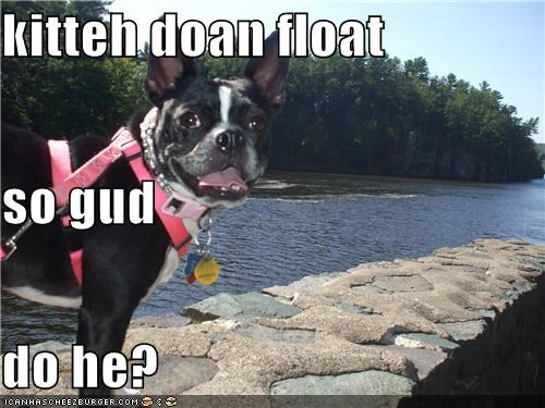 cat,does not,float,french bulldogs,kitty,observation,oops,question,sinking,test