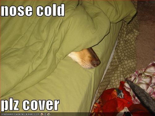 nose cold  plz cover