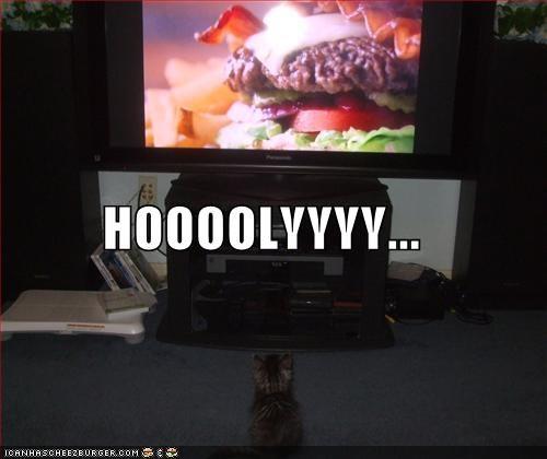 advertisement,amazed,burger,caption,captioned,gazing,holy,kitten,television