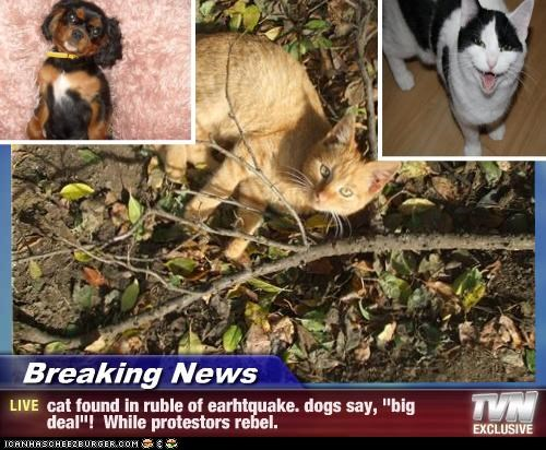 "Breaking News - cat found in ruble of earhtquake. dogs say, ""big deal""!  While protestors rebel."