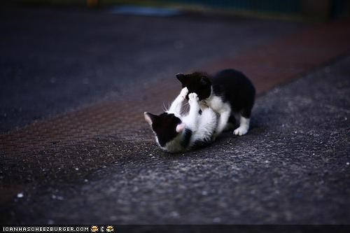 cyoot kitteh of teh day,kitten,streets,two cats,wrestling
