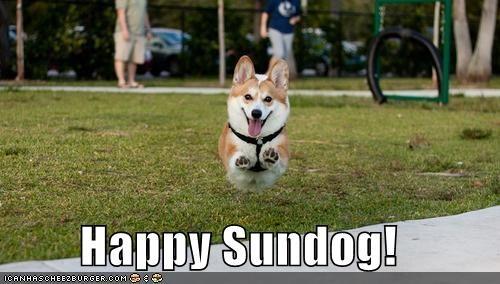 corgi,excited,flying,Hall of Fame,happy,happy sundog,hover dog,jumping,Sundog