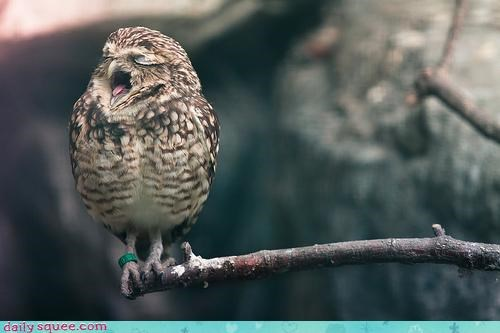 Acting Like Animals: Carmina BuranOWL