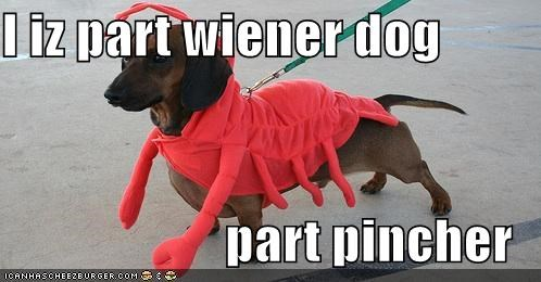 I iz part wiener dog                        part pincher