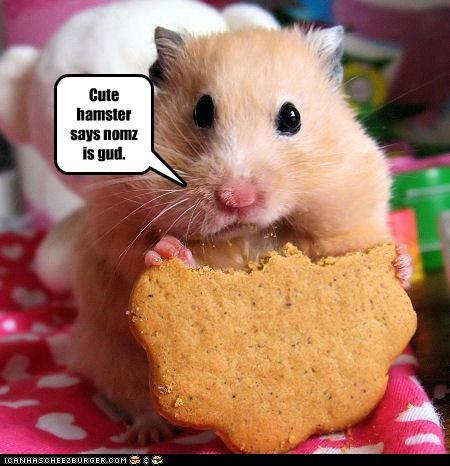 Cute hamster says nomz is gud.