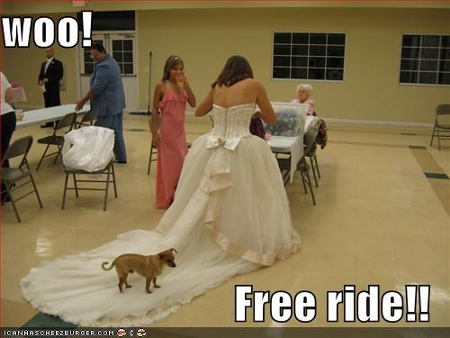 chihuahua,excited,exclamation,free,ride,train,wedding,wedding dress,woo