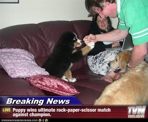 Breaking News - Puppy wins ultimate rock-paper-scissor match against champion.