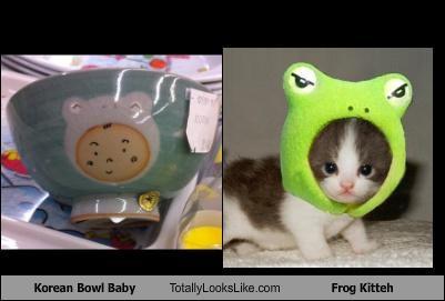 animals,baby,bowl,Cats,costume,frog,hat,kitten,korean