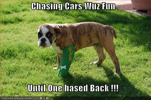 Chasing Cars Wuz Fun  Until One hased Back !!!