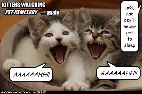 KITTEHS WATCHING