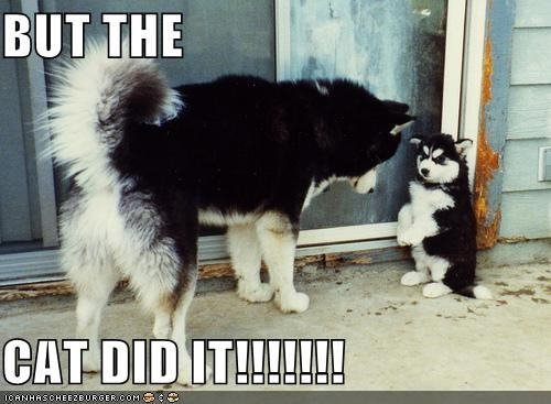 BUT THE  CAT DID IT!!!!!!!