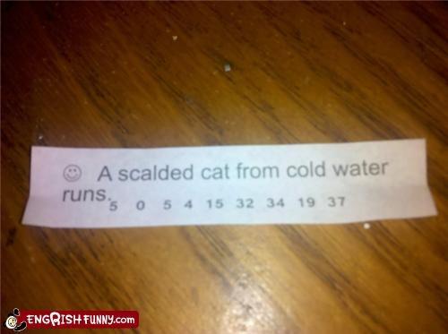 animals,cat,fortune cookie