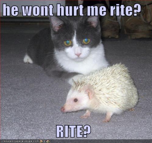 he wont hurt me rite?  RITE?