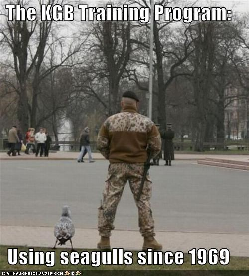 The KGB Training Program:  Using seagulls since 1969