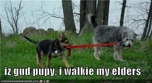 iz gud pupy, i walkie my elders