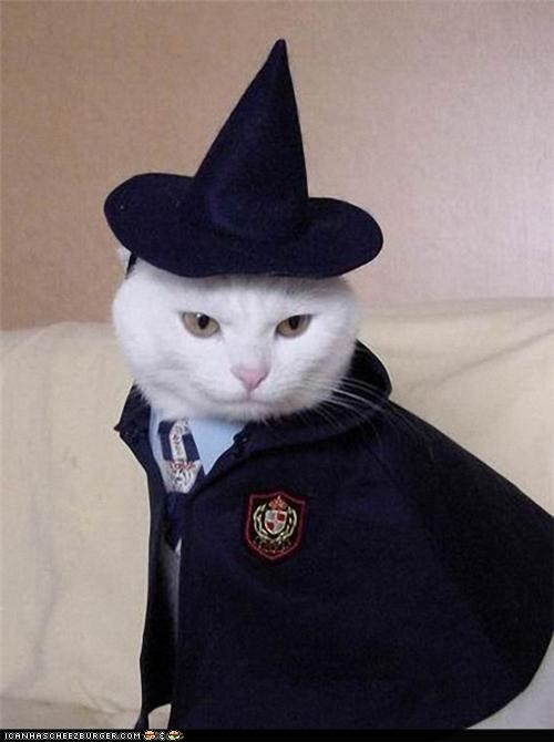Kittehs Celebrayt teh Releese ob teh New Harry Potter Film