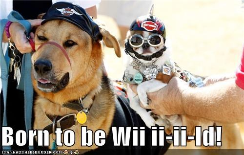 Born to be Wii ii-ii-ld!