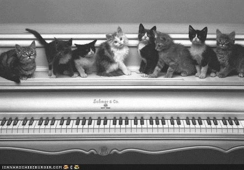 black and white,cyoot kitteh of teh day,kitten,lots,piano,recital