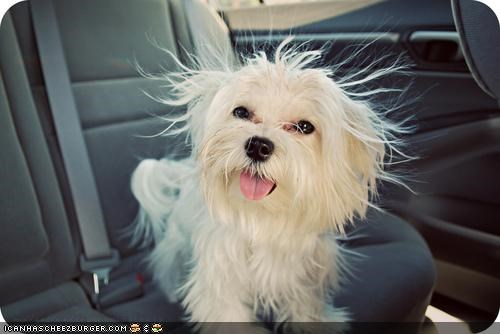 cute,cyoot puppeh ob teh day,happy,puppy,static,whatbreed