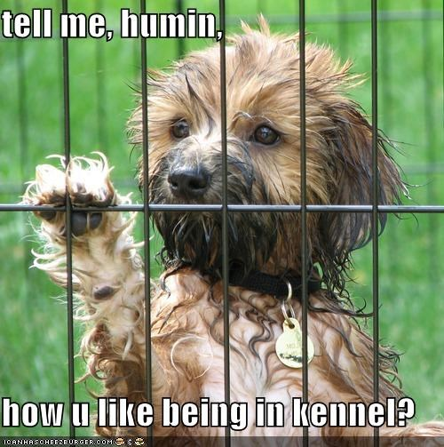 tell me, humin,  how u like being in kennel?