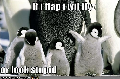 If i flap i wil flyz  or look stupid