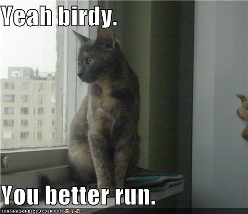 Yeah birdy.  You better run.