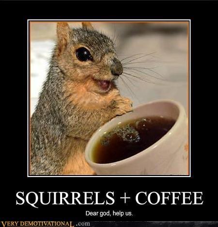 SQUIRRELS + COFFEE