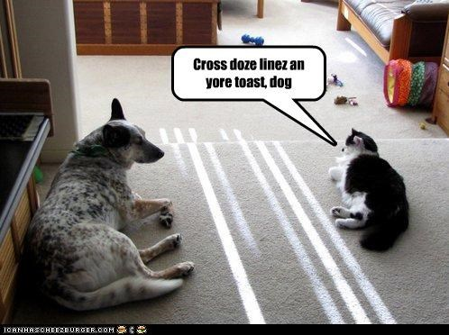 Cross doze linez an yore toast, dog