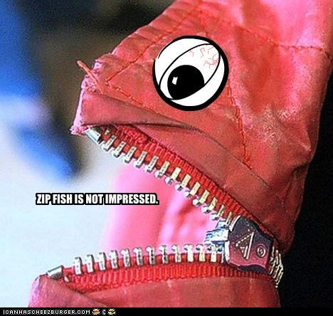 ZIP FISH IS NOT IMPRESSED.