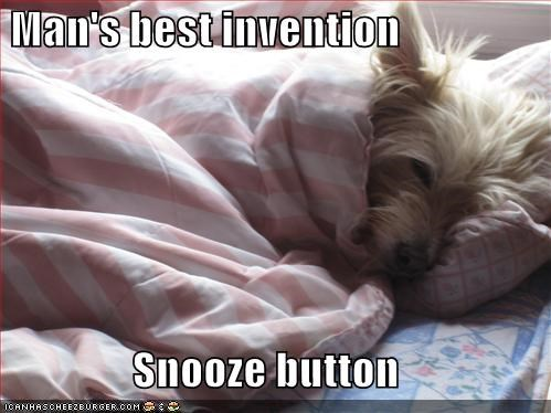 asleep,best,button,covers,invention,man,sleeping,snooze,snooze button,snuggling,terrier,west highland white terrier