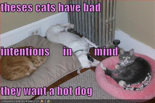 theses cats have bad  intentions      in          mind they want a hot dog