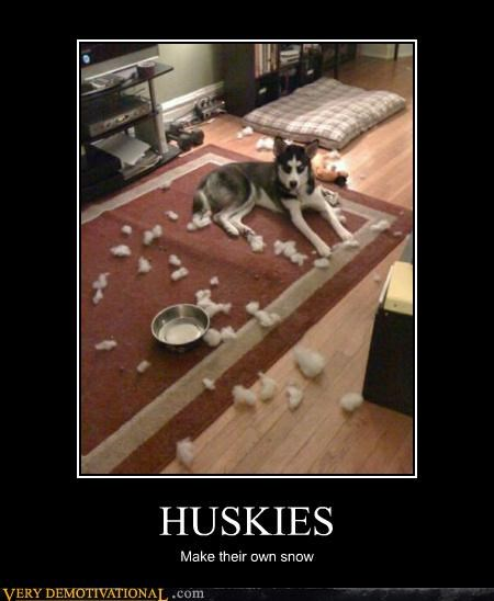 bad dog,cute,dogs,Hall of Fame,huskies,idiots,snow
