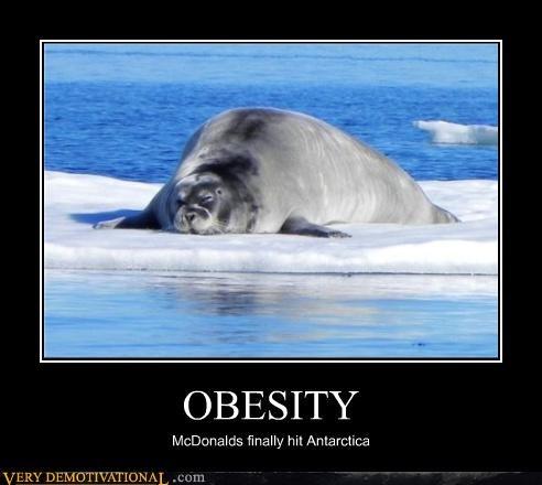 antartica,fat,McDonald's,obesity,problems,sad but true,seals