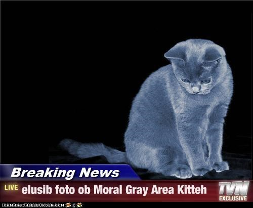 Breaking News - elusib foto ob Moral Gray Area Kitteh