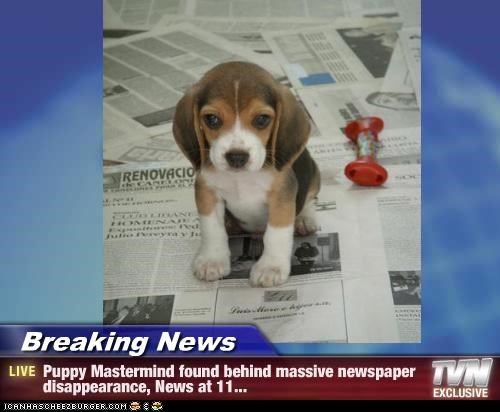 Breaking News - Puppy Mastermind found behind massive newspaper disappearance, News at 11...