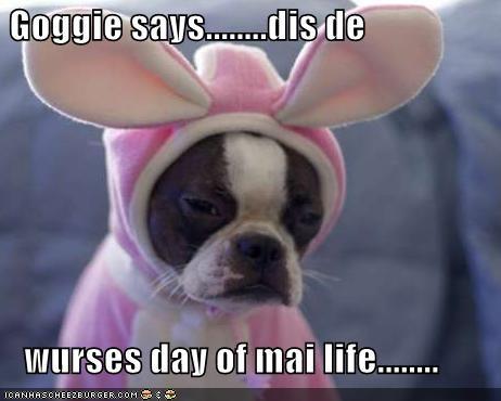 Goggie says........dis de     wurses day of mai life........