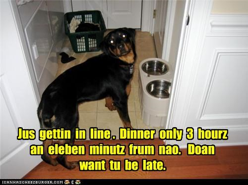 anticipation,away,dinner,elebenty,getting in line,line,noms,rottweiler,three hours,waiting